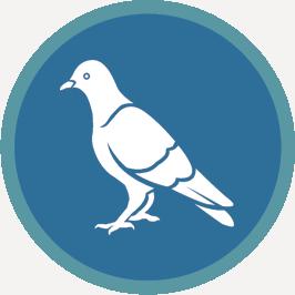 bird control adelaide